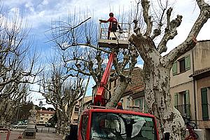 abbatage-platanes_ cours-republique_300x200